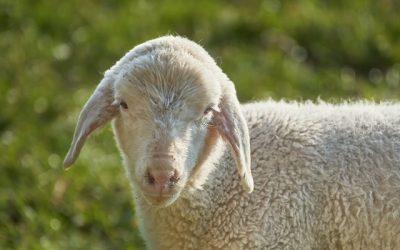 Dobry Pasterz